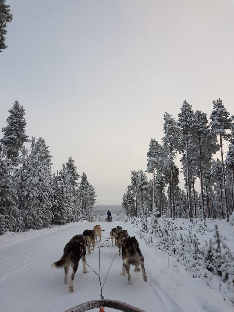 Guesthouse Husky Safari in Finland